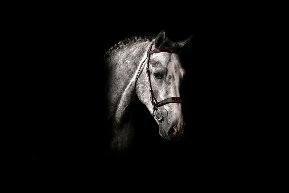 سیلمی آنتاچ ایبل : مرکز تولید و پرورش اسب اویسینا