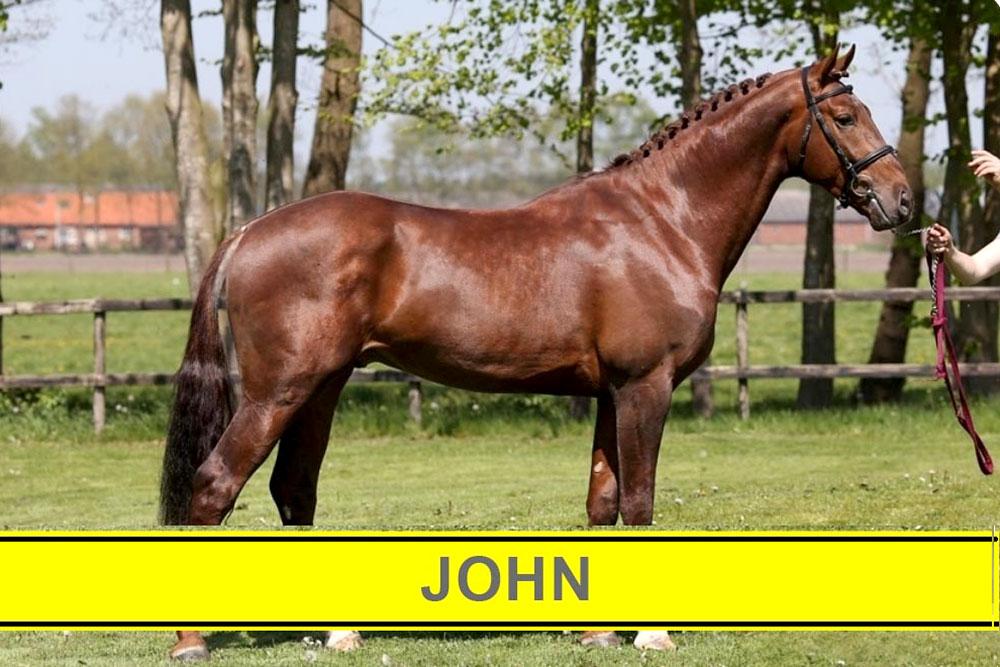 سیلمی جان : مرکز تولید و پرورش اسب اویسینا