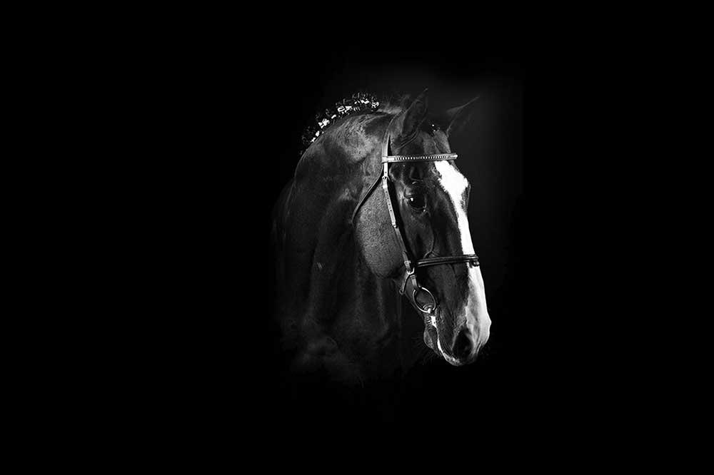 سیلمی بنی بانتوس در مرکز تولید و پرورش اسب اویسینا