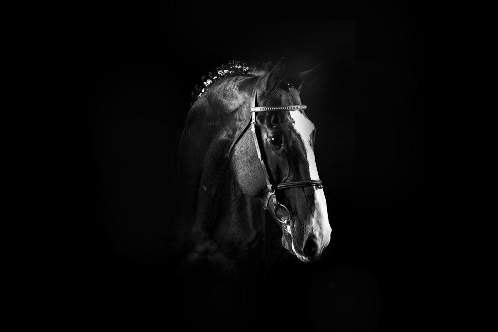 سیلمی بنی بانتوس : مرکز تولید و پرورش اسب اویسینا