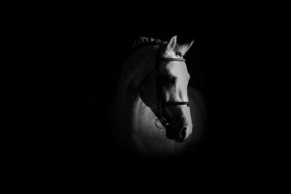 سیلمی آنتاچ ایبل: مرکز تولید و پرورش اسب اویسینا